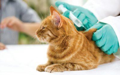 Los efectos secundarios de las vacunas en tu mascota