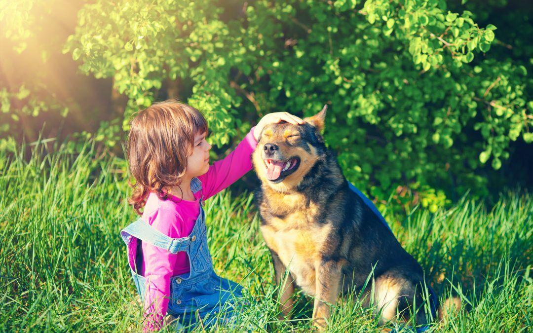 Cannabis para mascotas: ¿qué beneficios tiene?
