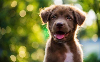 Cómo empezar a educar a nuestro cachorro: los mejores consejos
