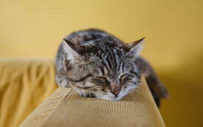 7 beneficios de tener un gato para la salud