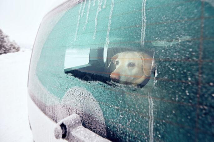 Viajar en coche con nuestro perro: seguridad y comodidad