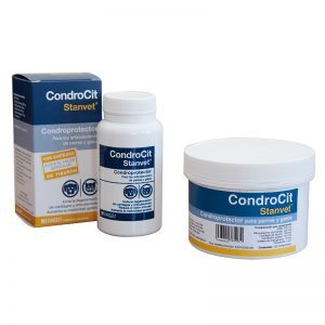 Condrocit - Stangest
