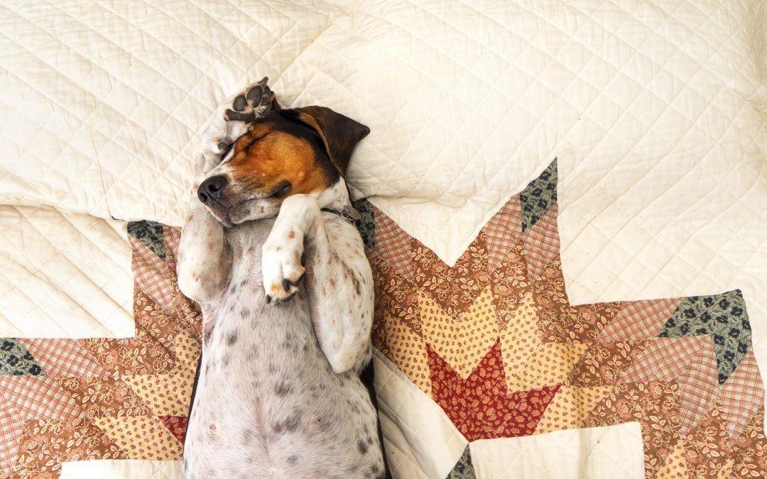 Cómo sacar una garrapata de tu perro