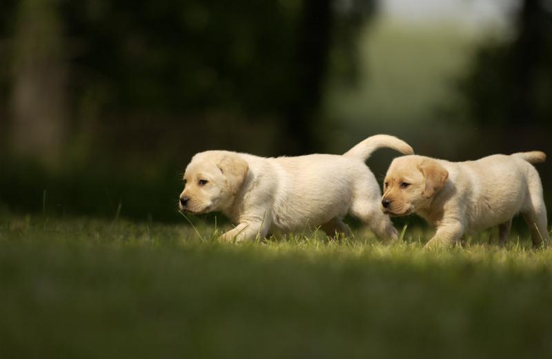 El calcio en las mascotas: ¿Es necesario darles una suplementación?