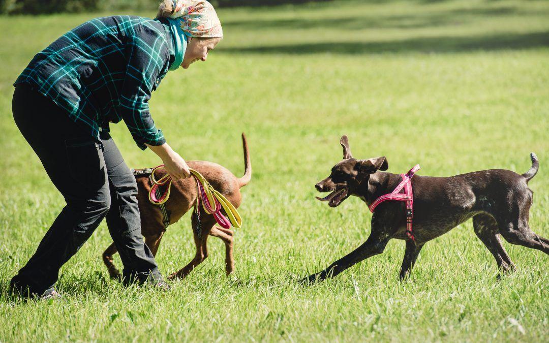 Adiestramiento canino: material necesario