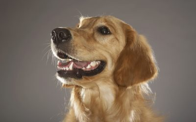 La higiene dental de tu mascota: preguntas y respuestas