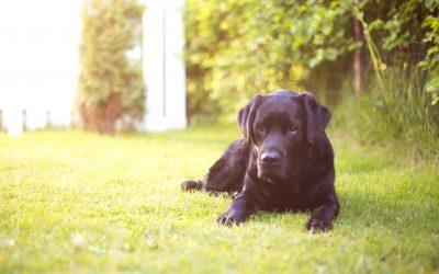 Ácidos grasos omega 3 y omega 6 para tu mascota