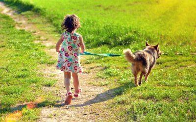 Qué tener en cuenta antes de adoptar a un animal de compañía