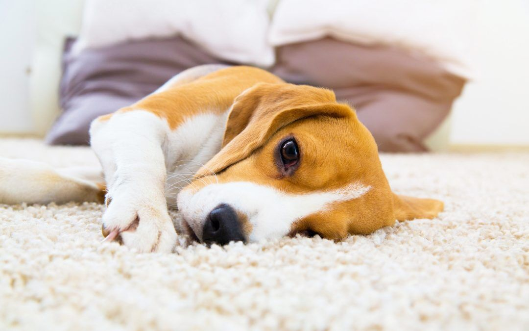Apoyo terapéutico de las enfermedades hepáticas en perros y gatos (y II)