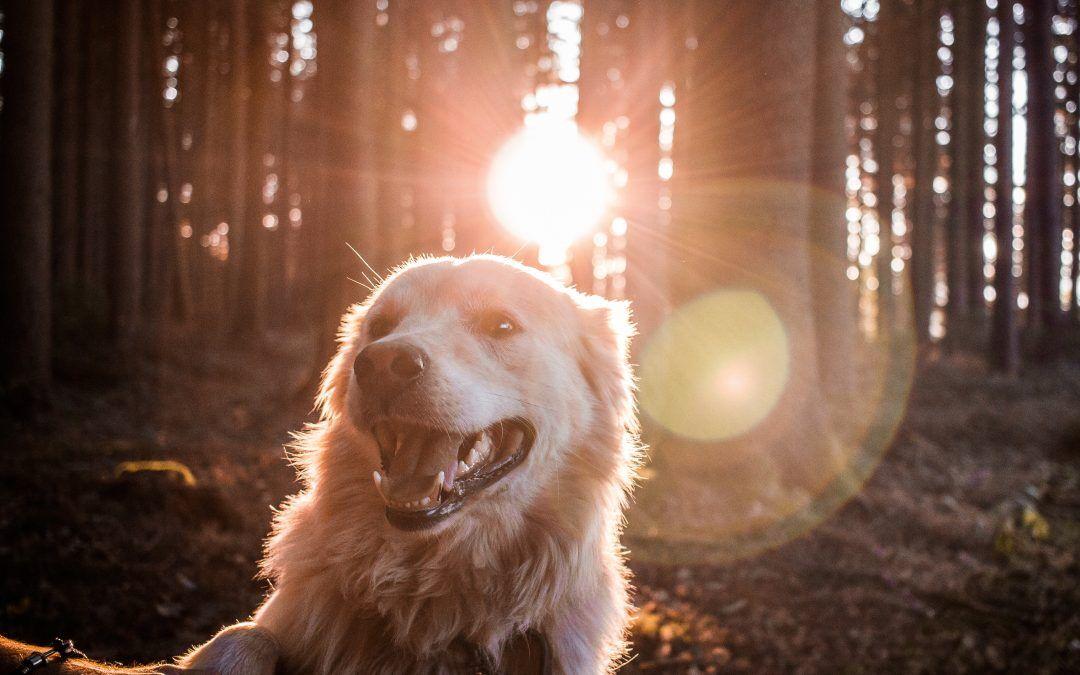 ¿Cómo reforzar las defensas de tu mascota?