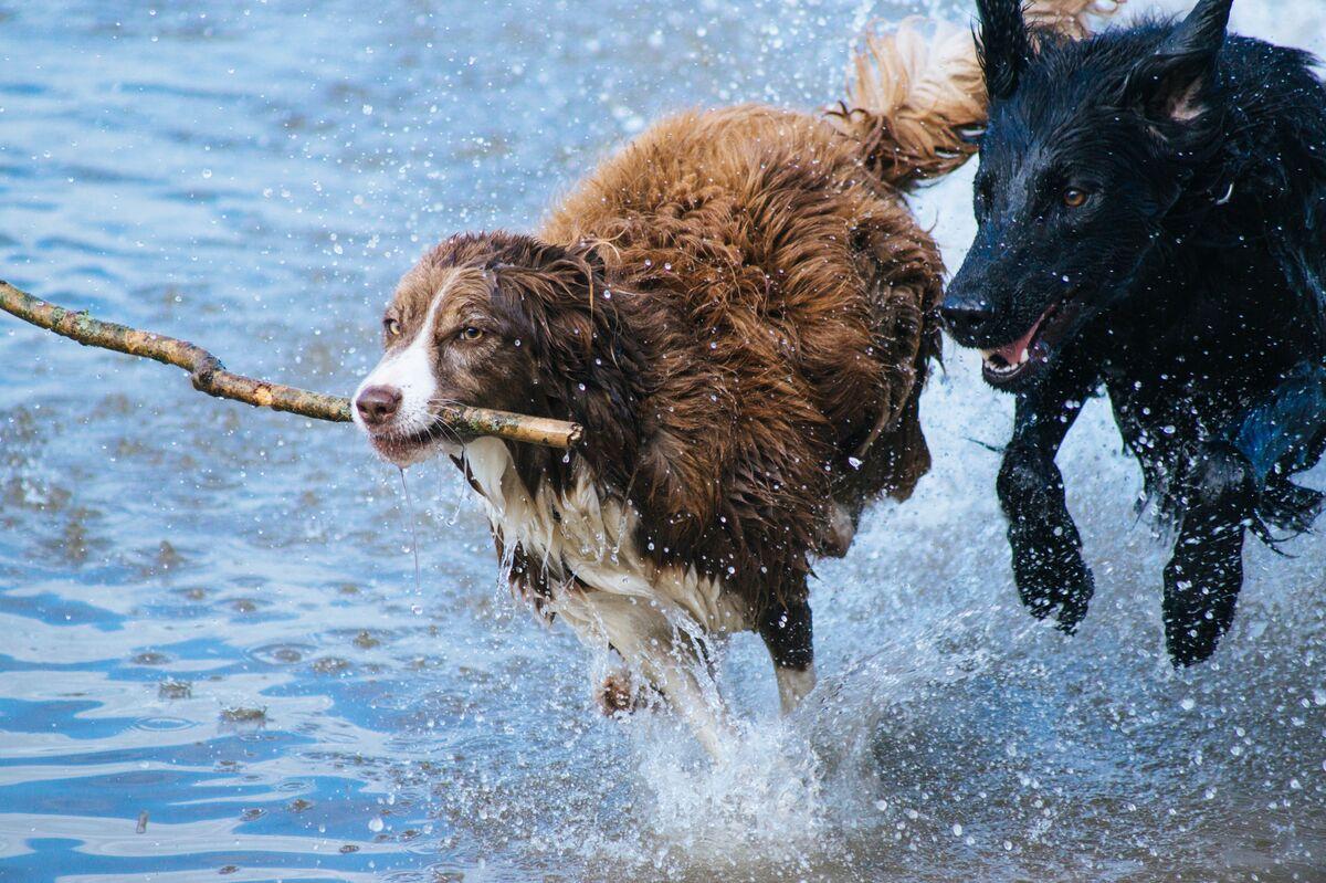 defensas mascotas