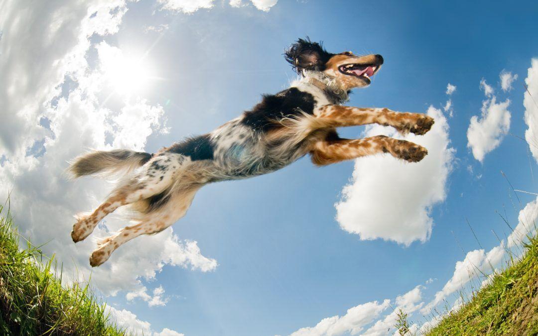 Cómo cuidar la salud articular de tu mascota
