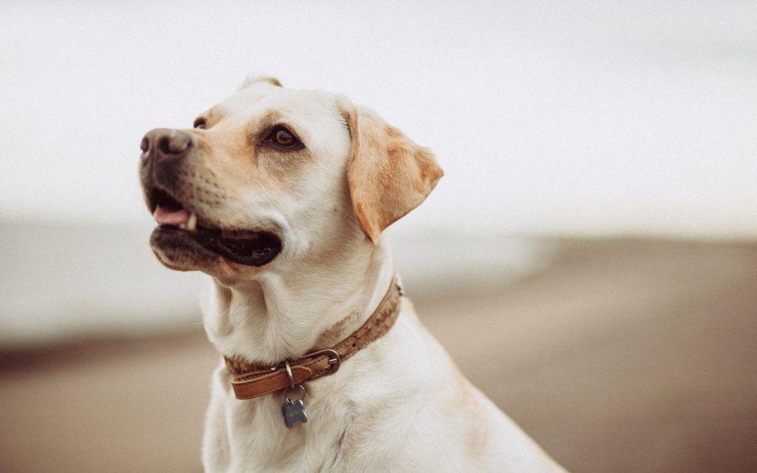 Suplementos naturales para perros y gatos con cáncer