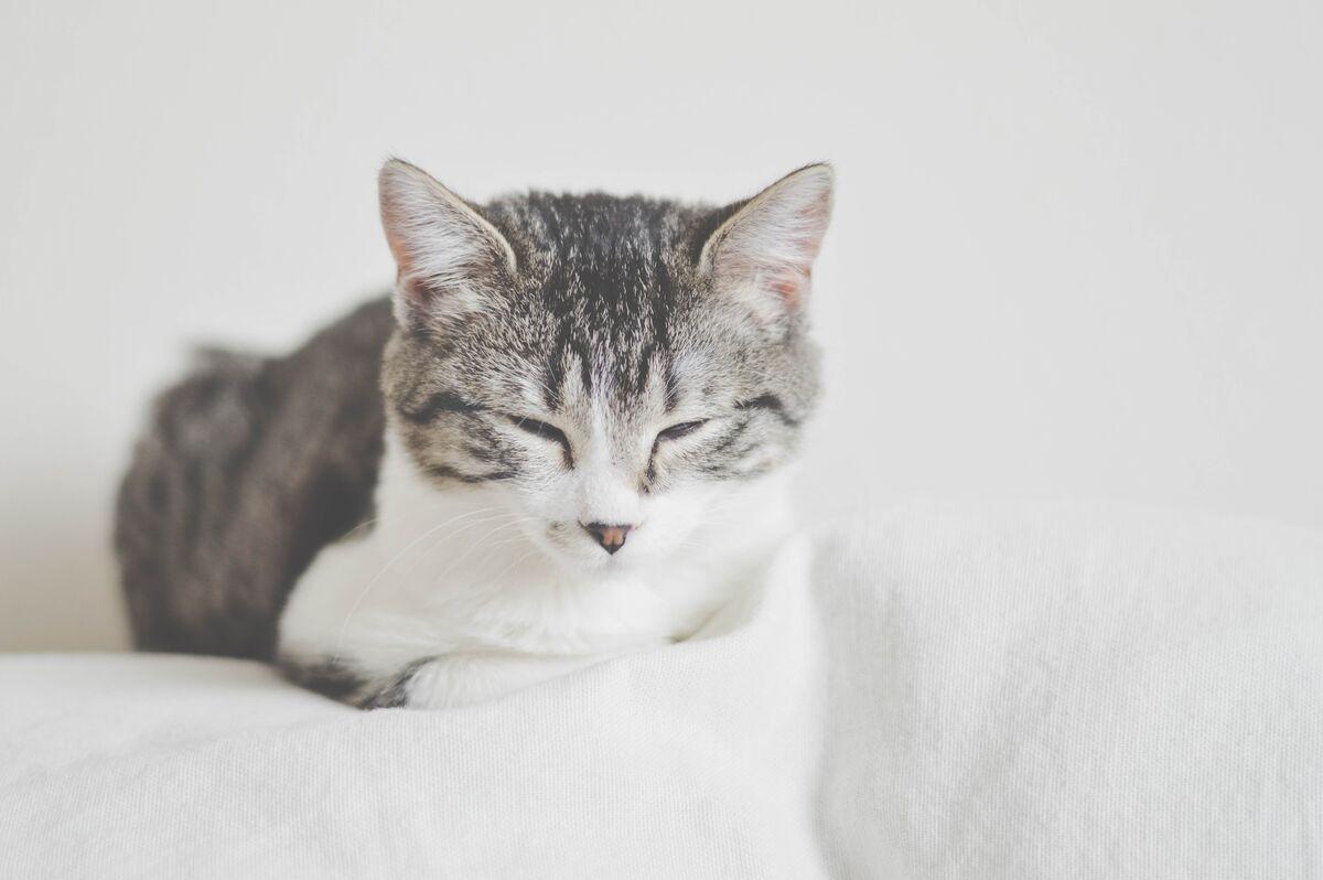 bandeja sanitaria para gatos