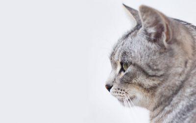 La bandeja sanitaria para gatos: preguntas y respuestas