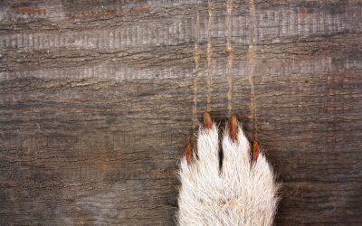 Cómo cortar las uñas a tu perro o a tu gato