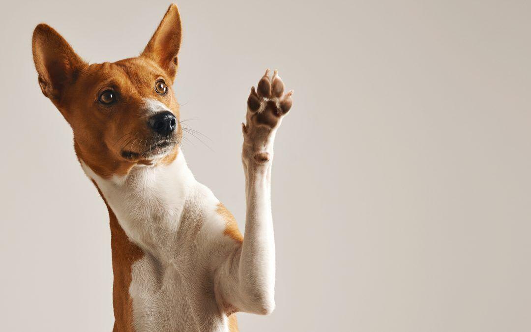 El cuidado de las almohadillas en los perros