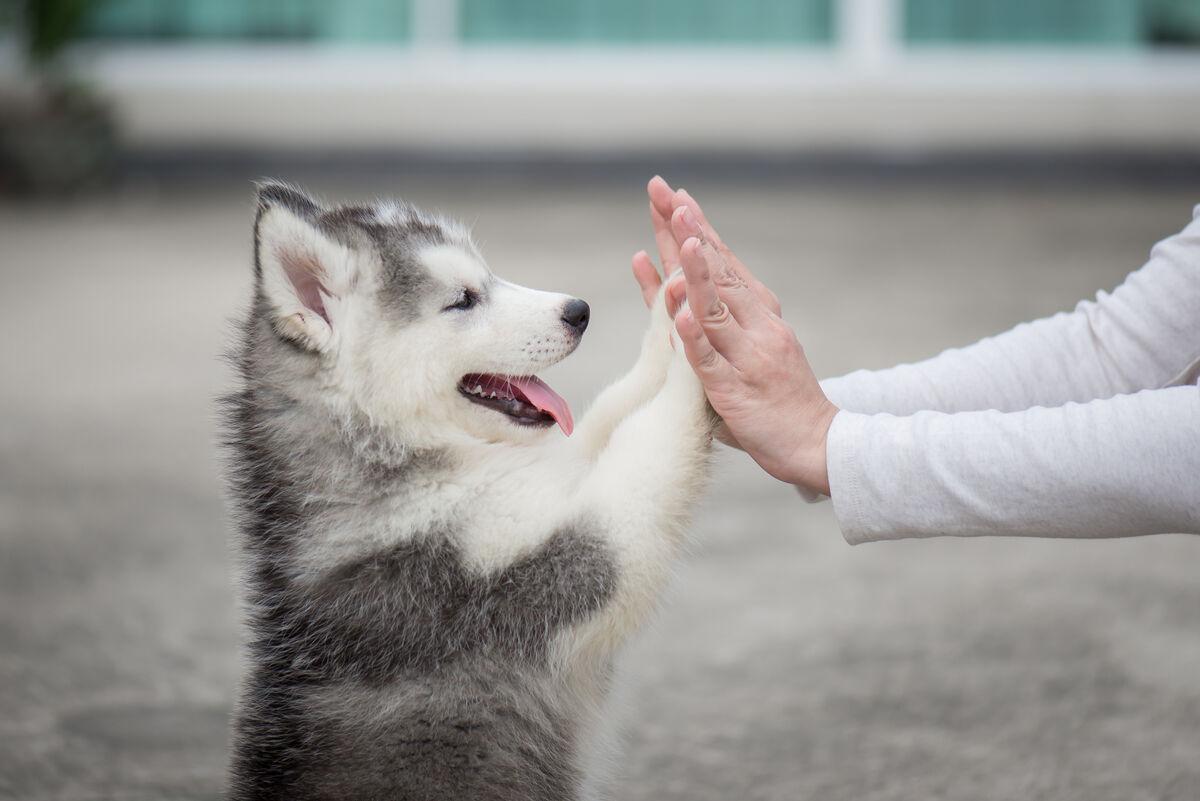 Almohadillas perros