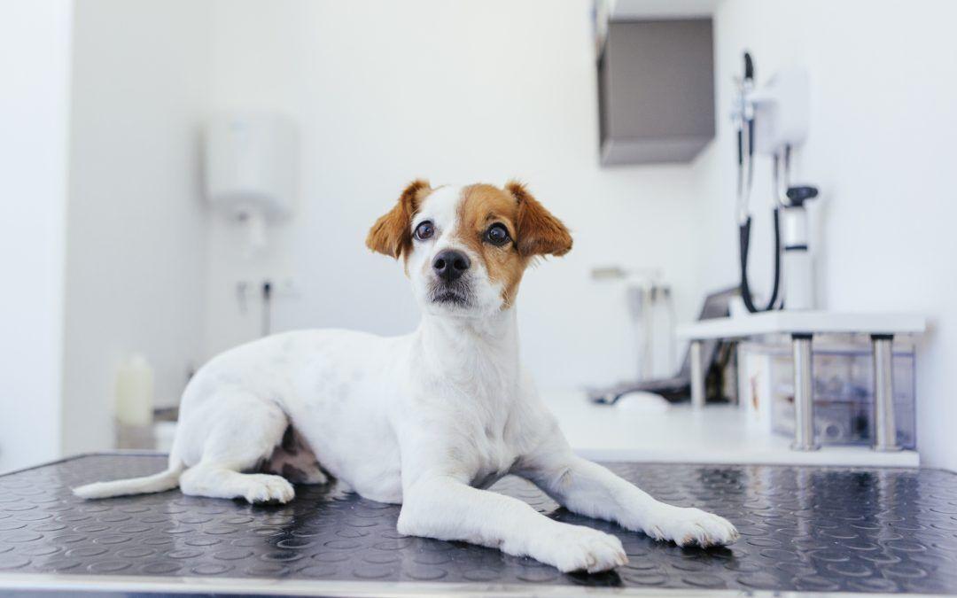 Todo sobre la esterilización y castración de perros y gatos