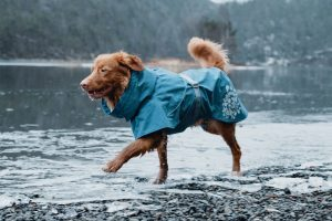 Monsoon Coat