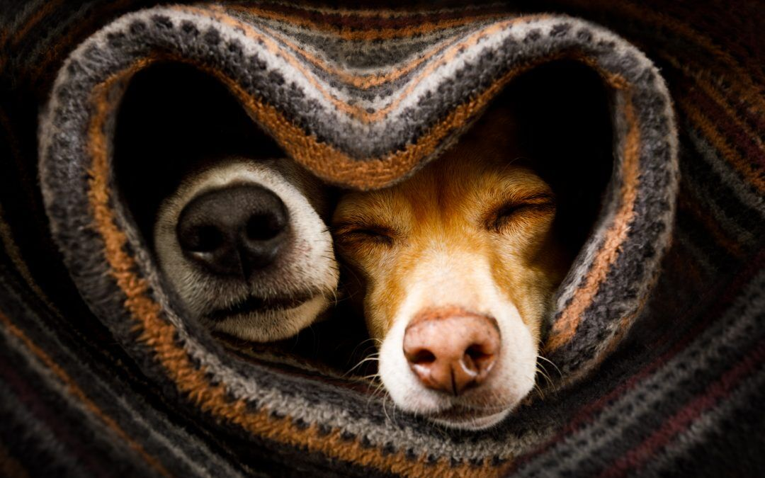Los resfriados en las mascotas