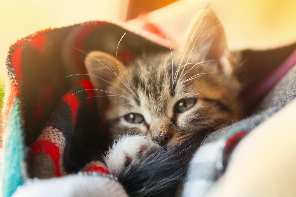 Resfriados en las mascotas