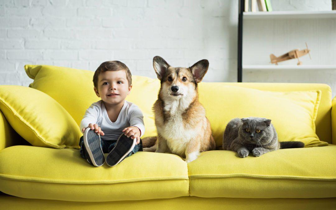 Vuelta a la nueva normalidad: posibles secuelas en perros y gatos