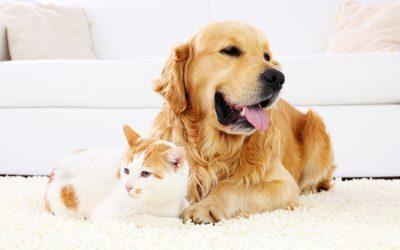 Protegido: Guía «5 ingredientes naturales clave para la salud de perros y gatos»