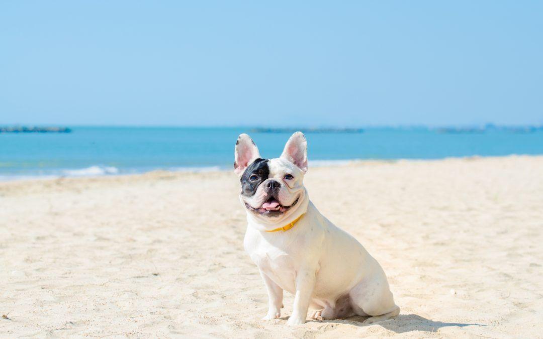 Tu mascota también necesita protección solar