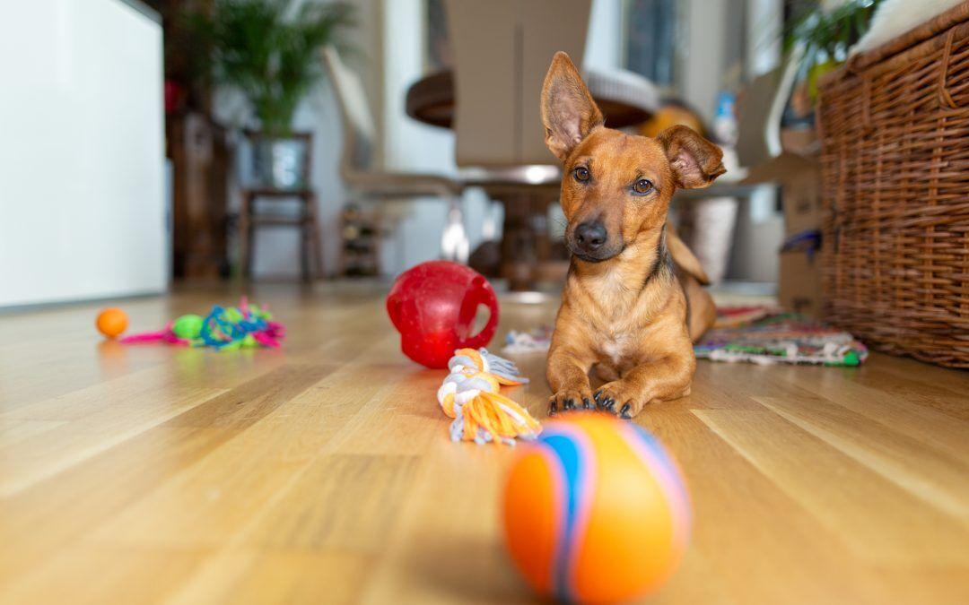 ¿Qué necesito antes de que llegue un nuevo cachorro en casa?